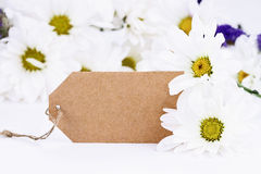 Blank Card and Daisies Stock Image