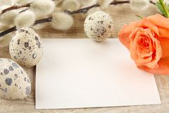 Blank card easter greetings wooden plank,eggs,catkins,feathers,orange rose Stock Photos