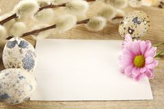 Blank card easter greetings wooden plank,eggs,catkins,feathers,pink flowe Stock Images