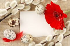 Blank card easter greetings wooden plank,eggs,catkins,red feathers,gerbera Royalty Free Stock Photos