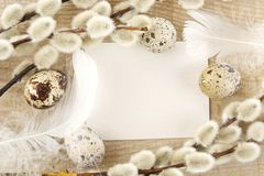 Blank card easter greetings wooden plank with eggs,catkins,white feathers Royalty Free Stock Photography
