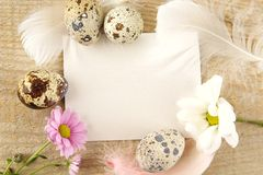 Blank card for easter greetings on wooden plank with eggs,flower Stock Image
