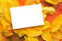 Blank card with fall leaves Royalty Free Stock Photo