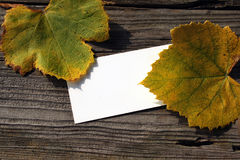 Blank card and fallen grape leaves Stock Photos