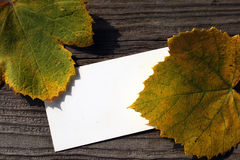 Blank card and fallen grape leaves Royalty Free Stock Photos