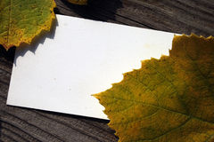 Blank card and fallen grape leaves Stock Photo