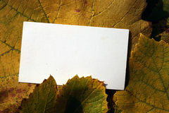 Blank card and fallen grape leaves Royalty Free Stock Photo