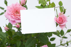 Blank card with flowers Royalty Free Stock Photos