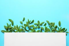 Blank card with green leaves. On color background Royalty Free Stock Photos