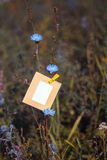 Blank card hanging on the flower chicory Stock Photography