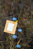 Blank card hanging on the flower chicory Stock Photos