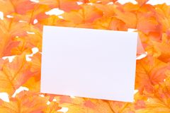 Blank card with a leaves Royalty Free Stock Photo