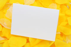 Blank card on petals Stock Images