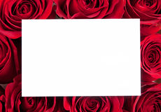 Blank card with red roses Stock Image