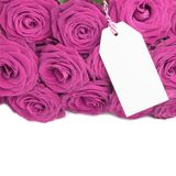 Blank card with roses Royalty Free Stock Images
