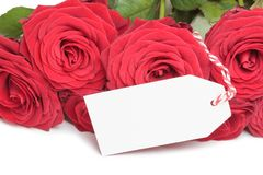 Blank card with roses Royalty Free Stock Photos
