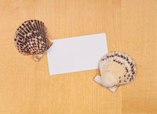 Blank Card with Shells Stock Image