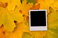 Blank card with soft shadow Royalty Free Stock Photo