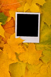 Blank card with soft shadow Royalty Free Stock Photography