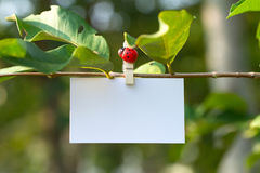 Blank card with spring background Royalty Free Stock Image