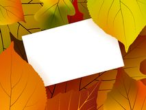 Blank card surrounded by beautiful autumn leaves Stock Images