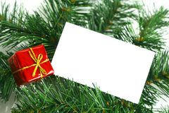 Blank card on tree Stock Image