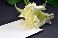 Blank card with a white rose Stock Photo