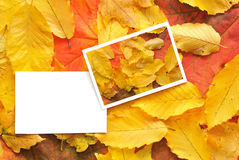 Blank cards with fall leaves Stock Image