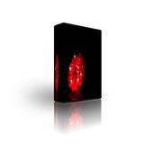 Blank CD DVD box template Stock Images