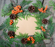 Blank christmas greeting card with fir tree, pinecones and rowan Royalty Free Stock Photo
