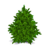 Blank Christmas Tree Royalty Free Stock Photography