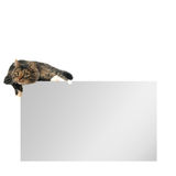 Blank copy space card with cat on top Stock Photography