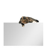 Blank copy space card with cat on top Stock Images