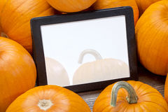 Blank digital tablet with pumpkins Stock Image