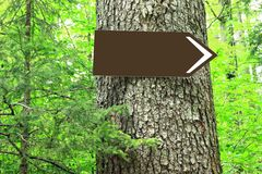 Blank direction sign on tree royalty free stock images