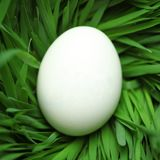 Blank Easter egg hidden in grass Royalty Free Stock Photography