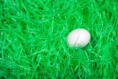 Blank Egg in the grass. Blank Easter egg on bed of easter grass Stock Photo