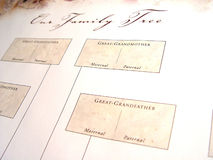 Blank Family Tree. Chart taken closeup Stock Photos