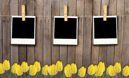 Blank fhoto frames on clothesline on wooden fence and flowers. Stock Photos