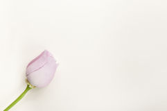 Blank flower celebration mail Stock Photography