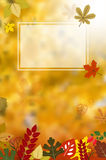 Blank frame on autumnal background. From falling leaves. Vector illustration Royalty Free Stock Image