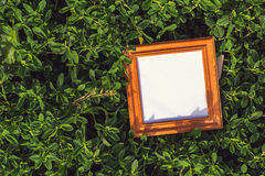 Blank frame in the grass outdoors Royalty Free Stock Photography