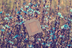 Blank frame hanging on the flowers chicory outdoors Royalty Free Stock Photos