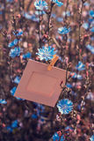 Blank frame hanging on the flowers chicory outdoors Royalty Free Stock Images