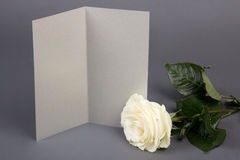 Blank gift card and beautiful white rose over grey Stock Photography