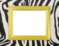 Blank golden frame  with zebra texture Stock Photos
