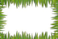 Blank grass pattern Royalty Free Stock Image