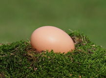 Blank green ecological fresh egg Royalty Free Stock Image