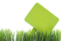 Blank Green Sign in Fresh Grass Royalty Free Stock Photo