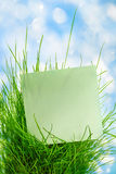 Blank green sticker in green grass Royalty Free Stock Photography